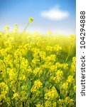 rape field  canola crops on... | Shutterstock . vector #104294888