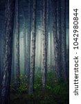 deep forest in the mist | Shutterstock . vector #1042980844