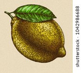 engrave isolated lemon hand... | Shutterstock . vector #1042986688