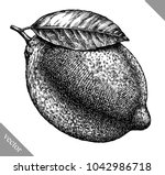 engrave isolated lemon hand... | Shutterstock .eps vector #1042986718