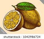 engrave isolated lemon hand... | Shutterstock .eps vector #1042986724