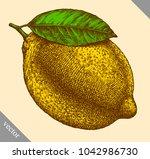 engrave isolated lemon hand... | Shutterstock .eps vector #1042986730