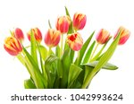Bouquet Of Red Tulips Isolated...