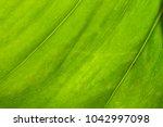 green palm leaf closeup | Shutterstock . vector #1042997098