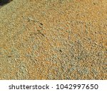 Small photo of corn or maize mix with Adulteration