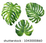 realistic tropical botanical... | Shutterstock . vector #1043000860