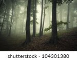 Tree Silhouettes In Dark Forest