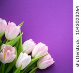 pink fresh spring tulips... | Shutterstock . vector #1043023264