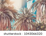palms in the city of los angeles | Shutterstock . vector #1043066320