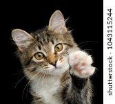 portrait of cute kitten with...   Shutterstock . vector #1043115244