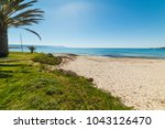 palm tree and green grass in le ... | Shutterstock . vector #1043126470