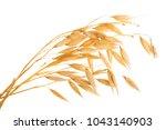oat spike or ears isolated on...   Shutterstock . vector #1043140903