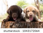 Stock photo two cute puppies on wooden bench funny puppies 1043172064