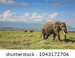 African Elephant On The Masai...