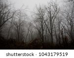 Landscape With Beautiful Fog I...