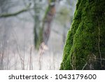 tree with moss on roots in a... | Shutterstock . vector #1043179600