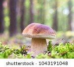 edible mushroom in autumn...   Shutterstock . vector #1043191048