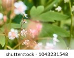 Tiny White Blossoms With Purpl...