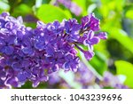 spring background with blooming ... | Shutterstock . vector #1043239696