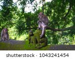 the adult monkey sitting on the ... | Shutterstock . vector #1043241454