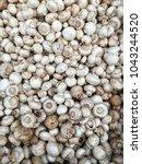 tiny champignon mushrooms. very ... | Shutterstock . vector #1043244520