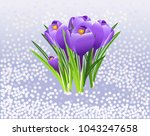 vector illustration. crocuses... | Shutterstock .eps vector #1043247658