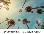 los angeles palm trees  low... | Shutterstock . vector #1043257390