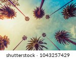 los angeles palm trees on sunny ... | Shutterstock . vector #1043257429