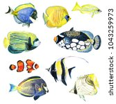 collection of tropical fishes.... | Shutterstock . vector #1043259973