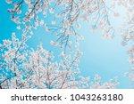 beautiful cherry blossom sakura ... | Shutterstock . vector #1043263180