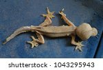 abnormal lizard stand on the...   Shutterstock . vector #1043295943