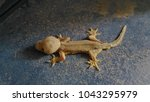 abnormal lizard stand on the...   Shutterstock . vector #1043295979