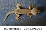 abnormal lizard stand on the...   Shutterstock . vector #1043296096