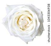 white rose isolated on white   Shutterstock . vector #1043306938