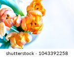 colorful yellow tulips | Shutterstock . vector #1043392258
