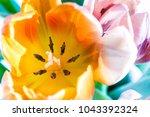 spring tulips background | Shutterstock . vector #1043392324
