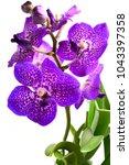 purple vanda orchid  | Shutterstock . vector #1043397358