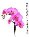 pink orchid flower | Shutterstock . vector #1043401624