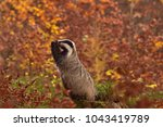 beautiful praying european... | Shutterstock . vector #1043419789