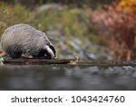 drinking beautiful european... | Shutterstock . vector #1043424760