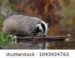 drinking beautiful european... | Shutterstock . vector #1043424763