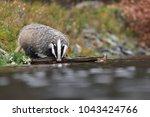drinking beautiful european... | Shutterstock . vector #1043424766