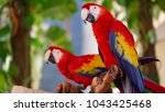 pair of big parrot scarlet... | Shutterstock . vector #1043425468