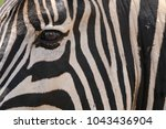 stripes in black and white on a ... | Shutterstock . vector #1043436904
