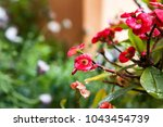 crown of thorns  plant of... | Shutterstock . vector #1043454739