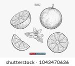 hand drawn orange isolated.... | Shutterstock .eps vector #1043470636