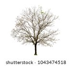 the dried tree on a white... | Shutterstock . vector #1043474518