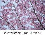 last sakura japan | Shutterstock . vector #1043474563