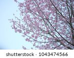 last sakura japan | Shutterstock . vector #1043474566
