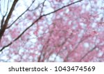 last sakura japan | Shutterstock . vector #1043474569